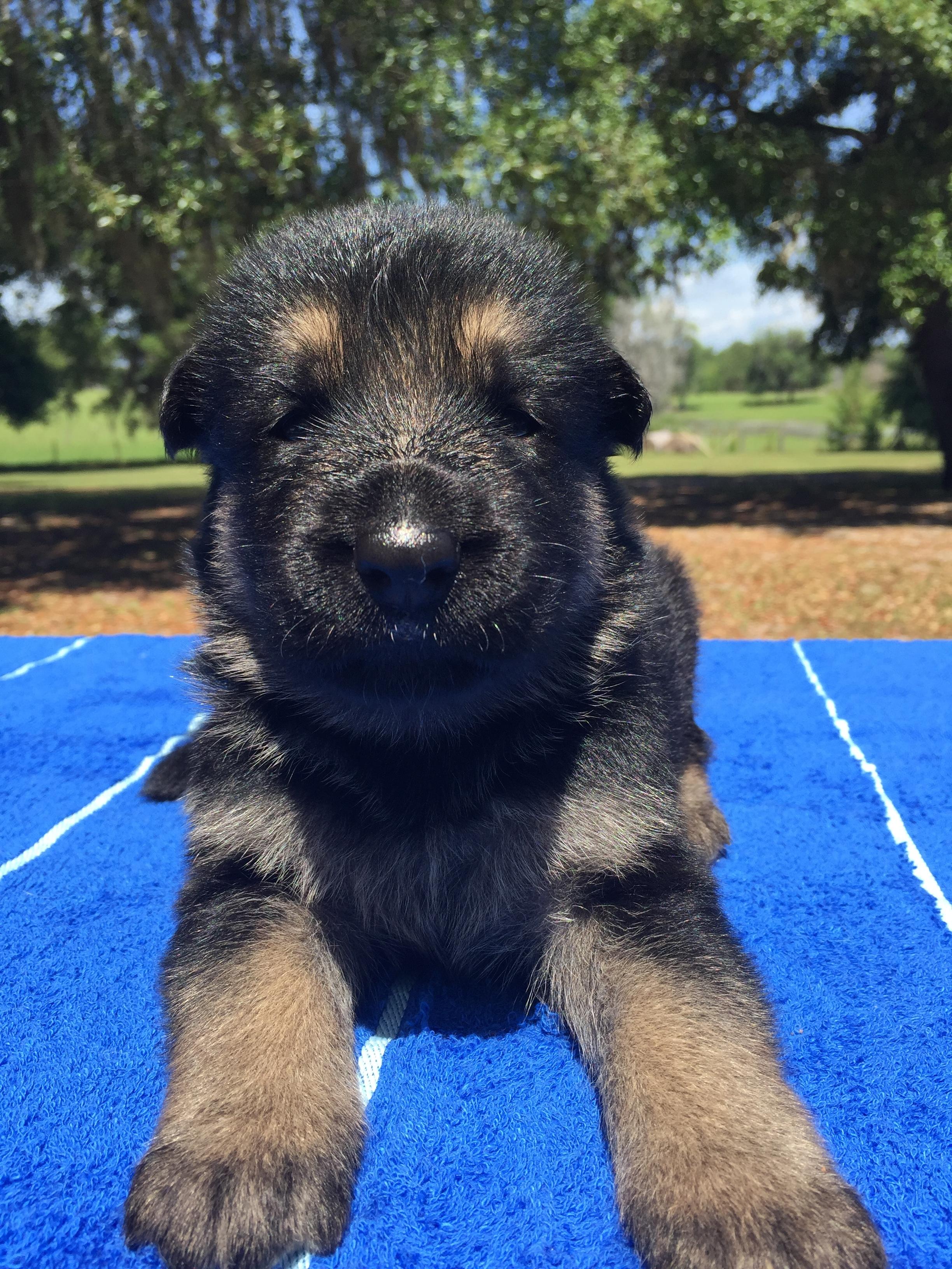 Sweet little puppy face