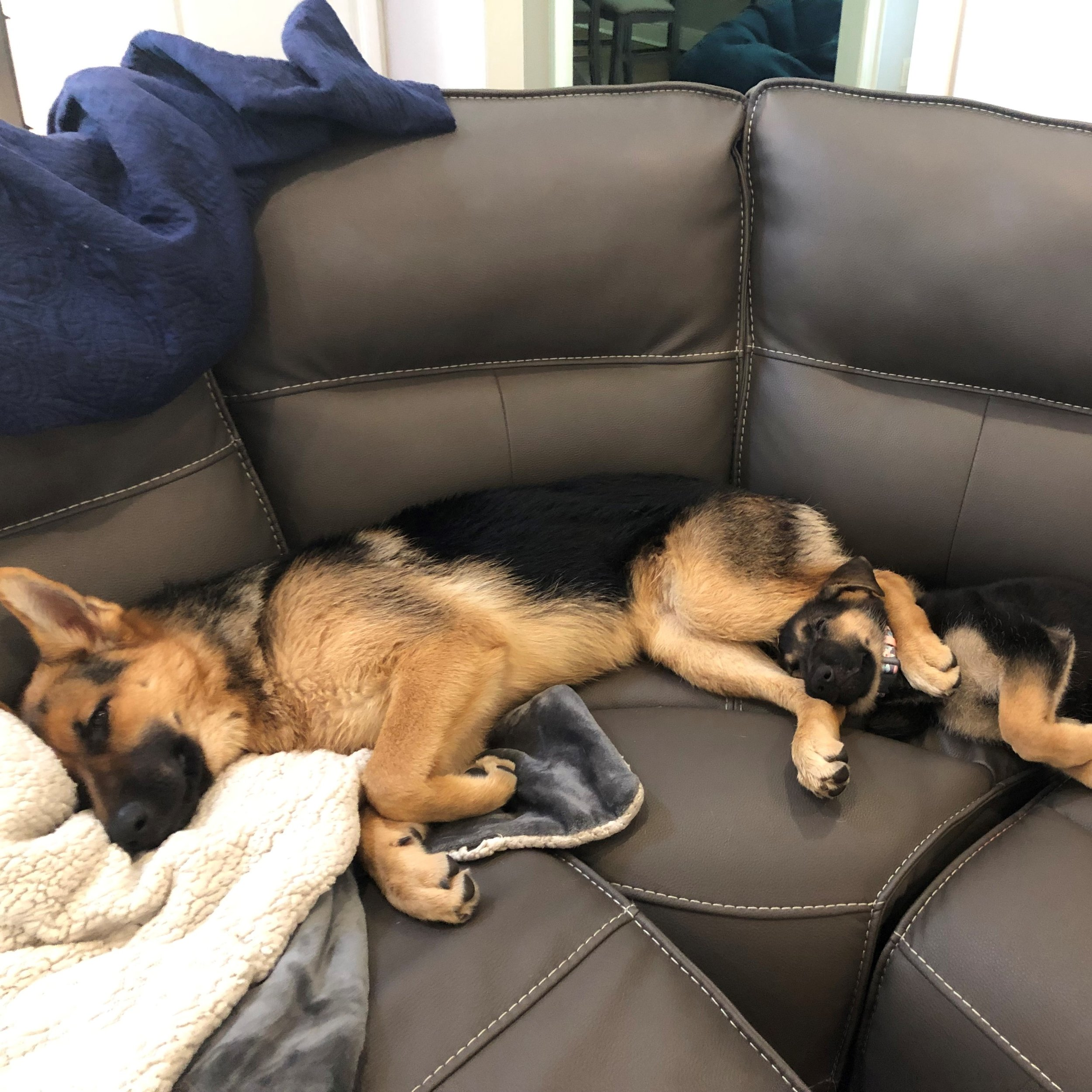 Two Trusted Guardian Pups - One New Family