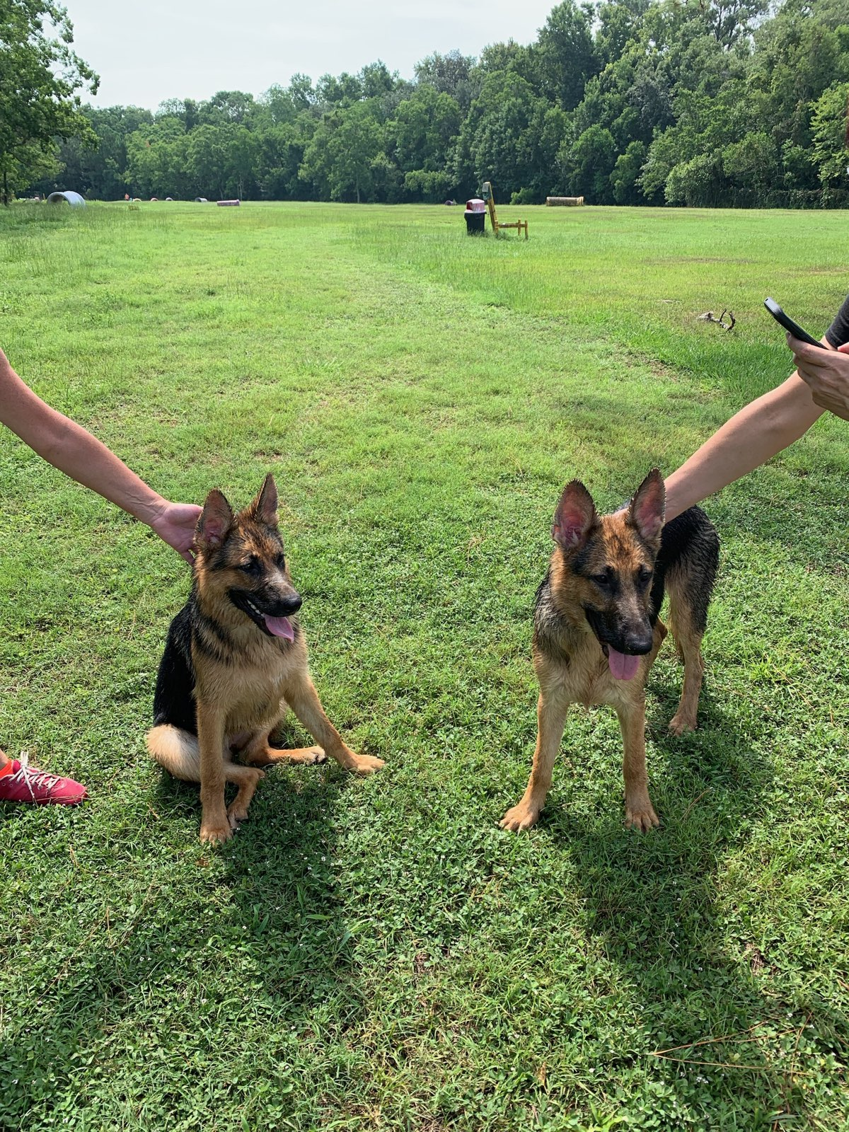 Kyia on the left and Maverick on the right.jpg