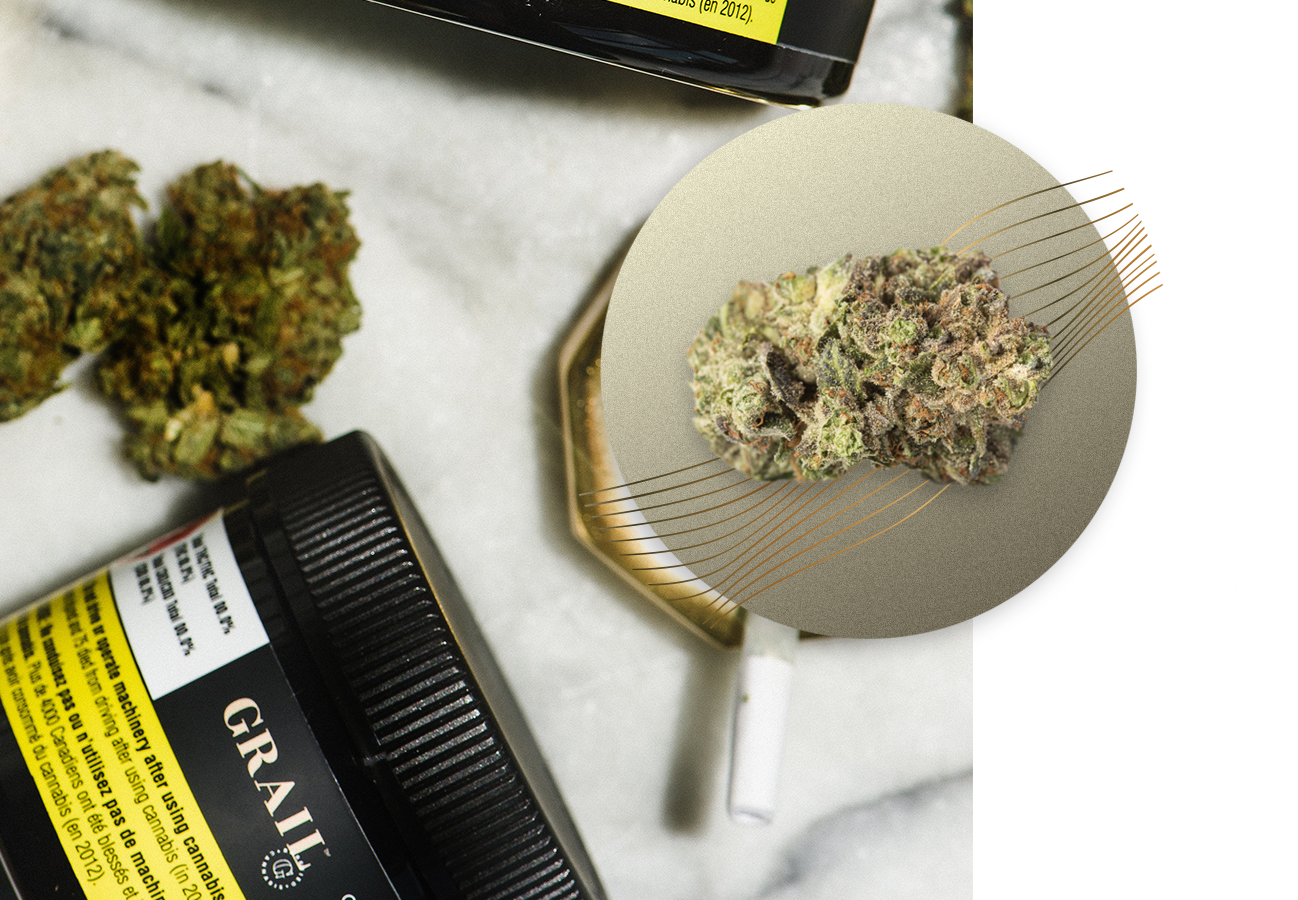 MASTER KUSH - Master Kush is a very popular Indica strain and for good reason. It provides full-body relaxation but without the mind-fogginess indica's are known for. Expect flavours of earthiness and pine.INDICA High PotencyIndoor Grown, Dried Cannabis Flower: 1g, 3.5g, 15gTERPENESMyrcene, Humulene, Beta-CaryopheleneFLAVOUR PROFILEEarthy, Pungent, Pine
