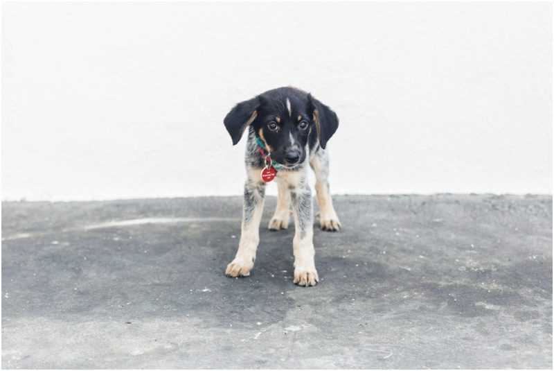 precious puppy available for adoption in los angeles