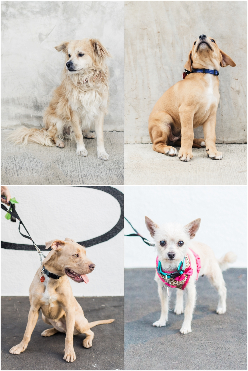 wags and walks dog rescue is the best in los angeles