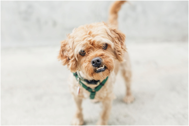 bring happiness home with this scruffy puppy