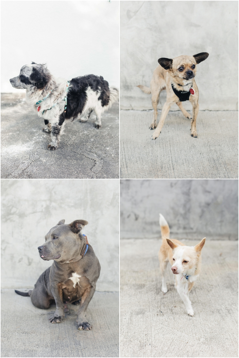 dogs with spots available for adoption