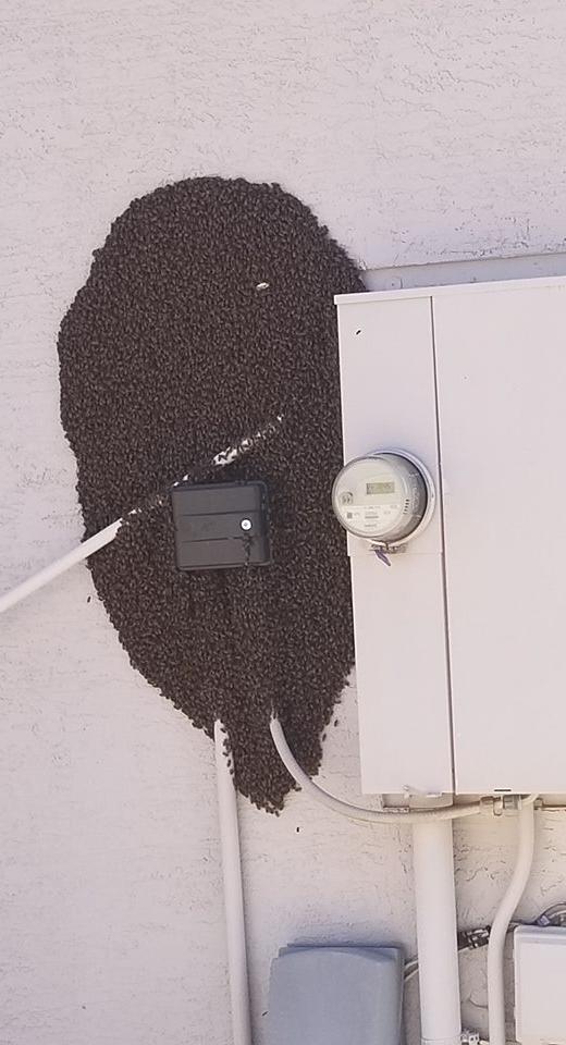 Bee swarm on wall
