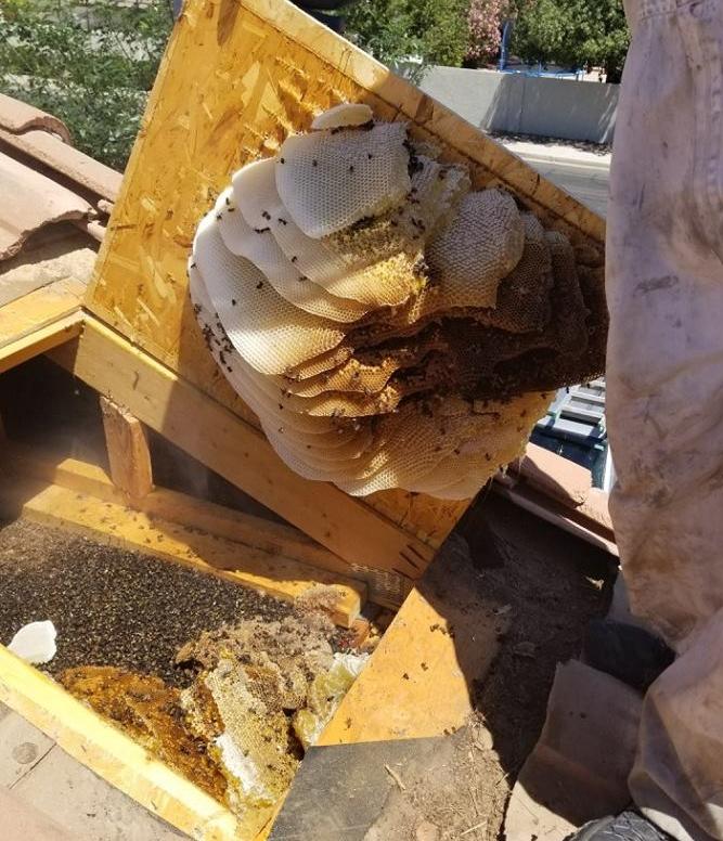 Honey removal