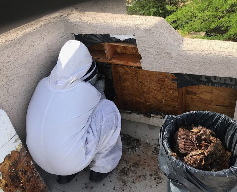 Removing honeycomb in wall