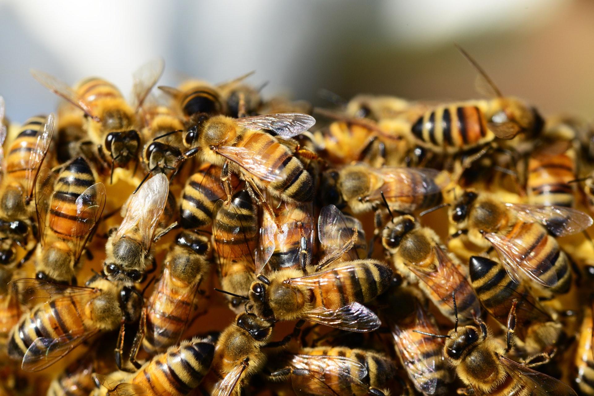 bee removal phoenix.jpg
