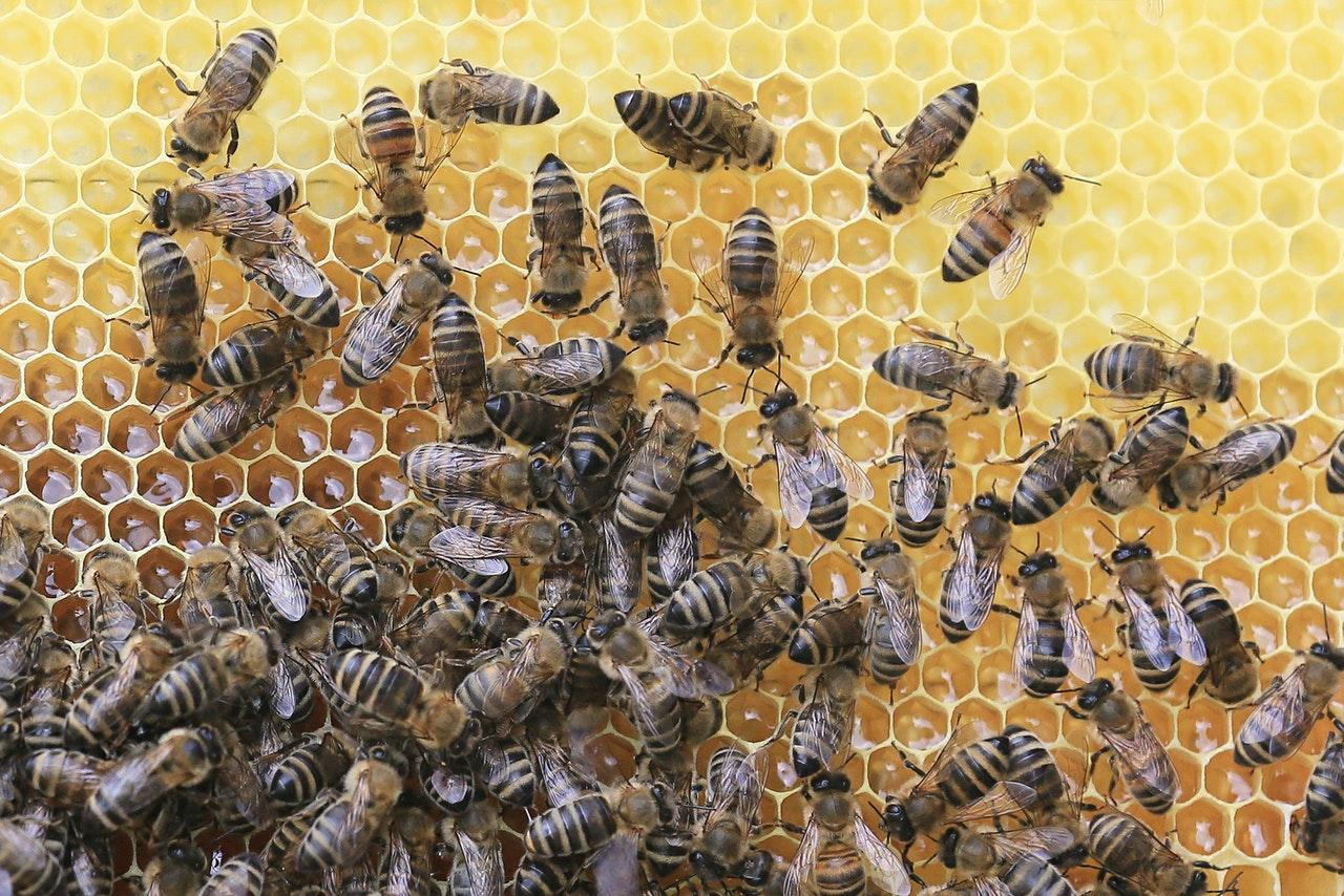 bee honeycomb.jpg
