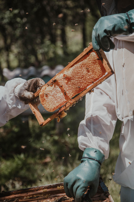 active bee hive.jpg