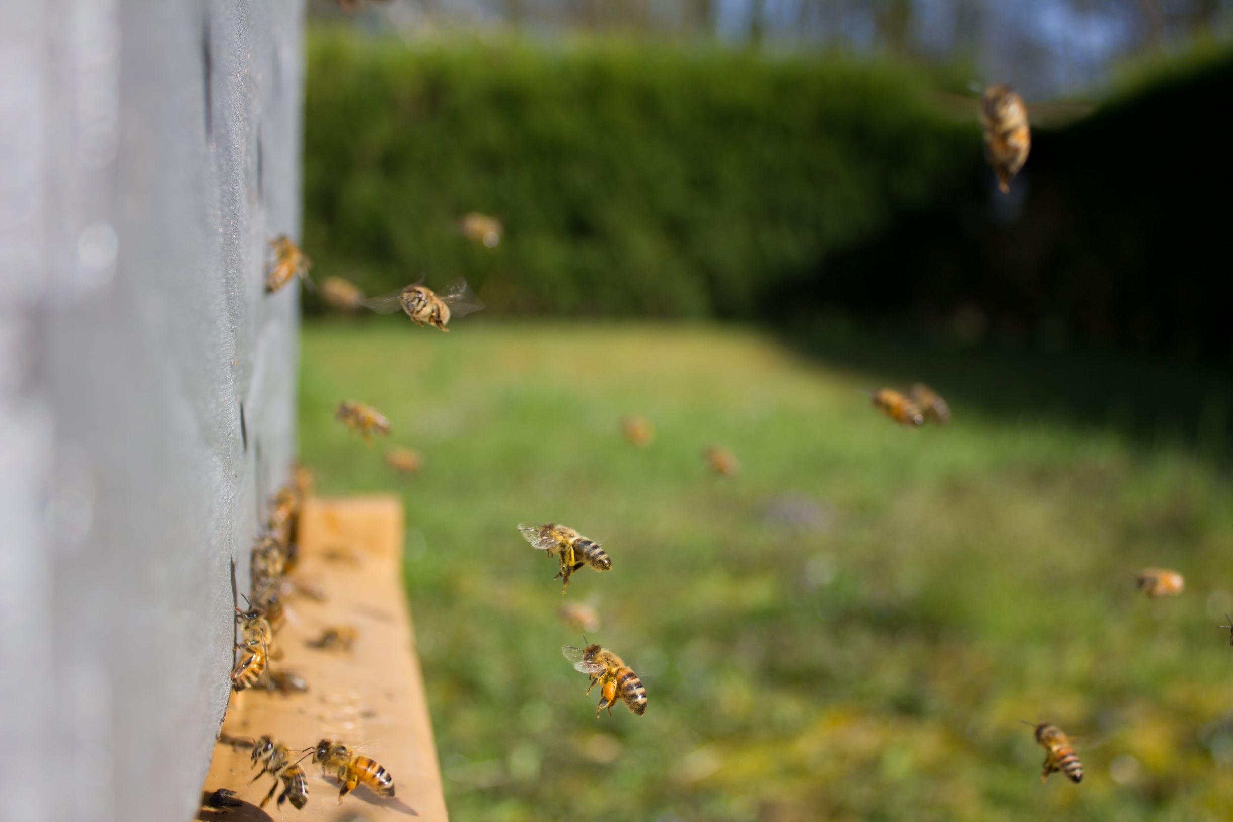 beehive queen creek.jpg
