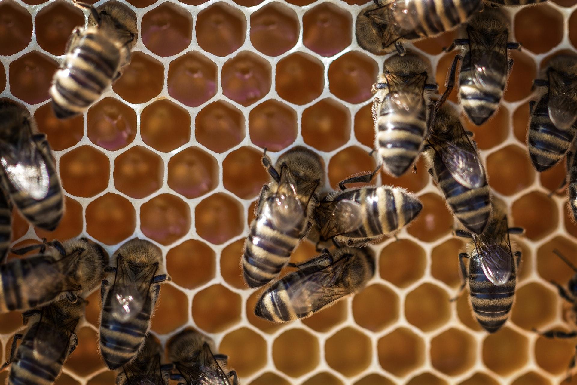 bee hive gilbert.jpg