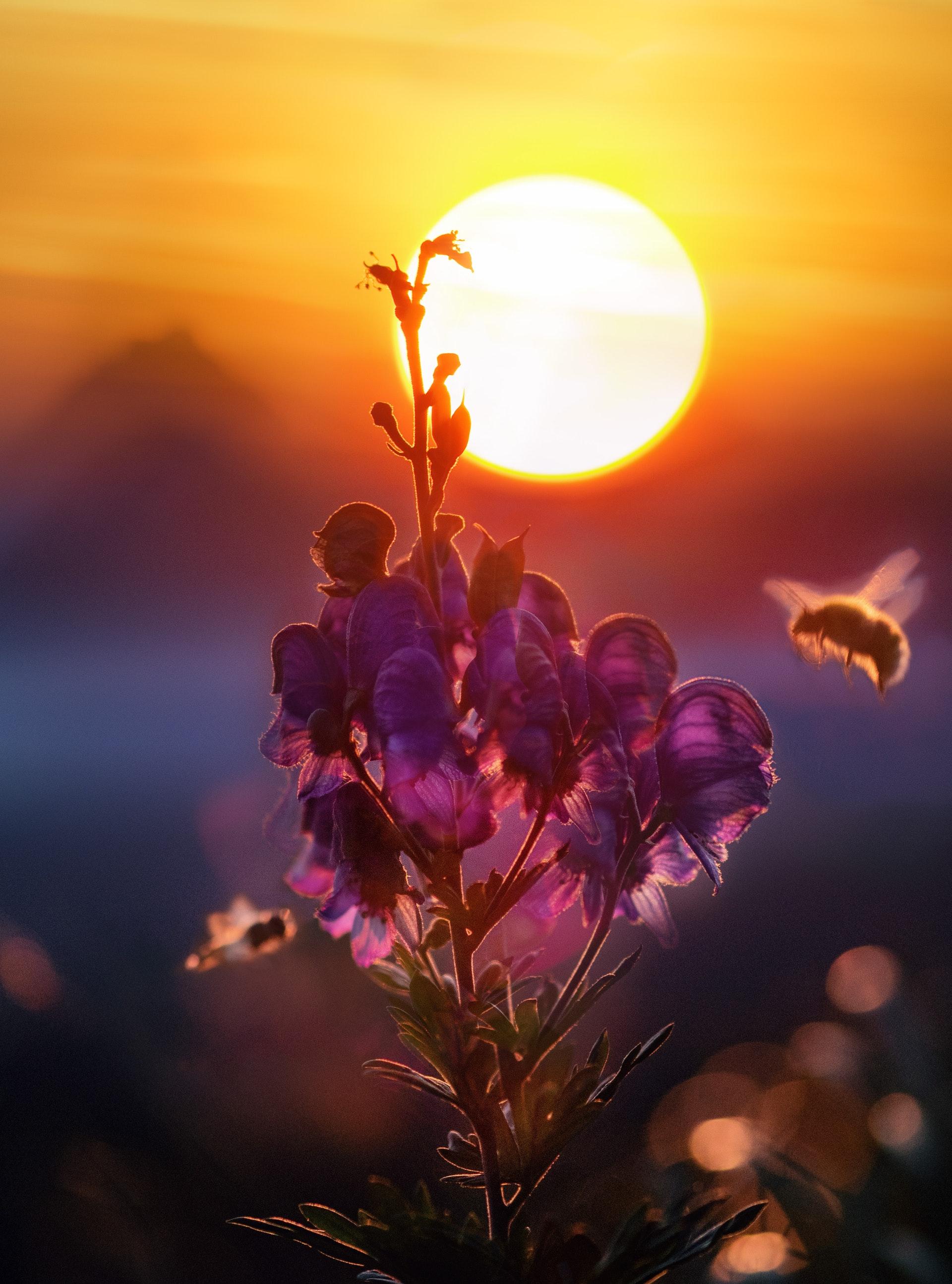 types of bees in arizona.jpg