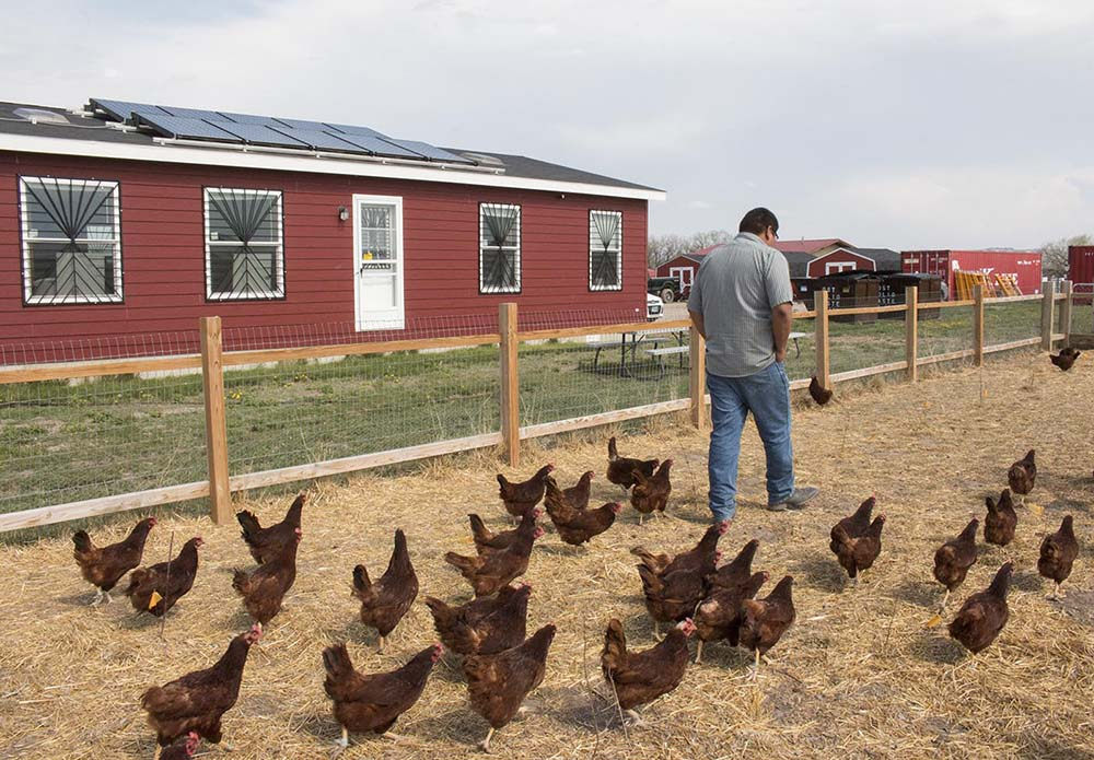 Ernest in the chicken pen at Thunder Valley.