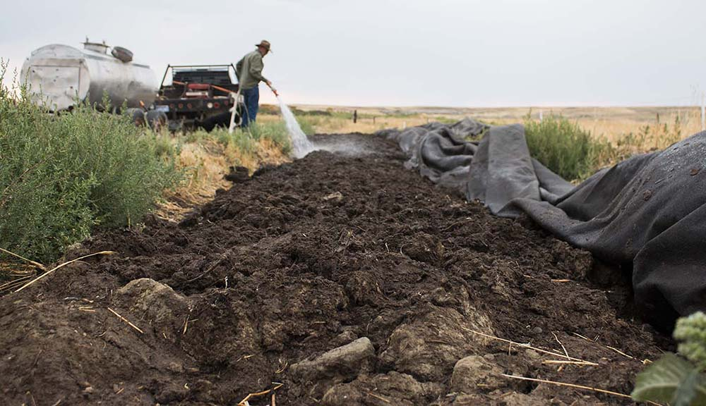 Steve waters the soil before covering it to trap the moisture into the ground.