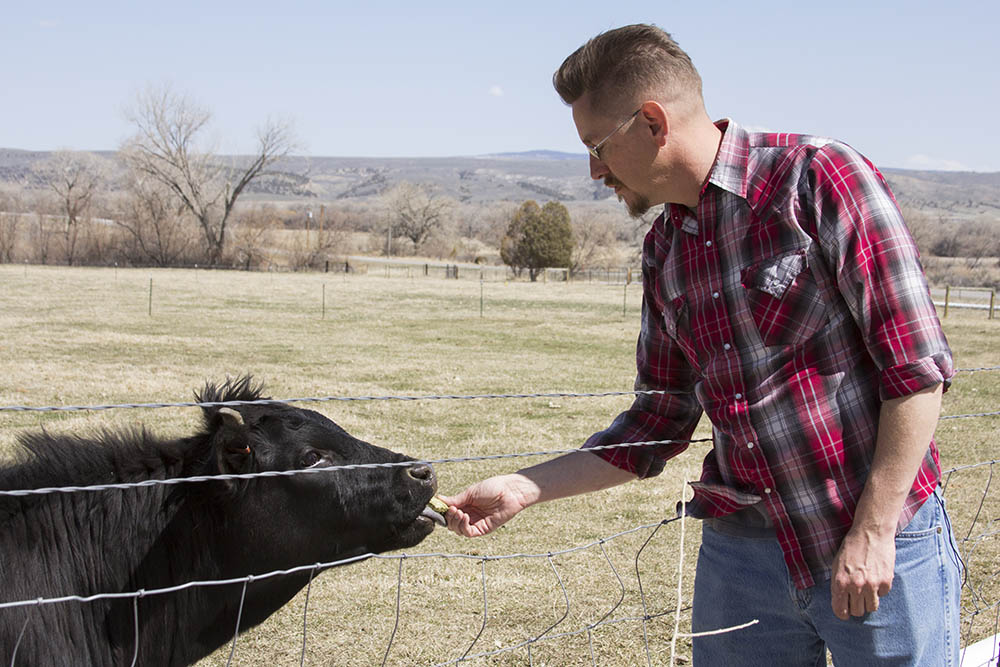 Tom feeds a cow at Nash Farms in Carbon County, Montana.