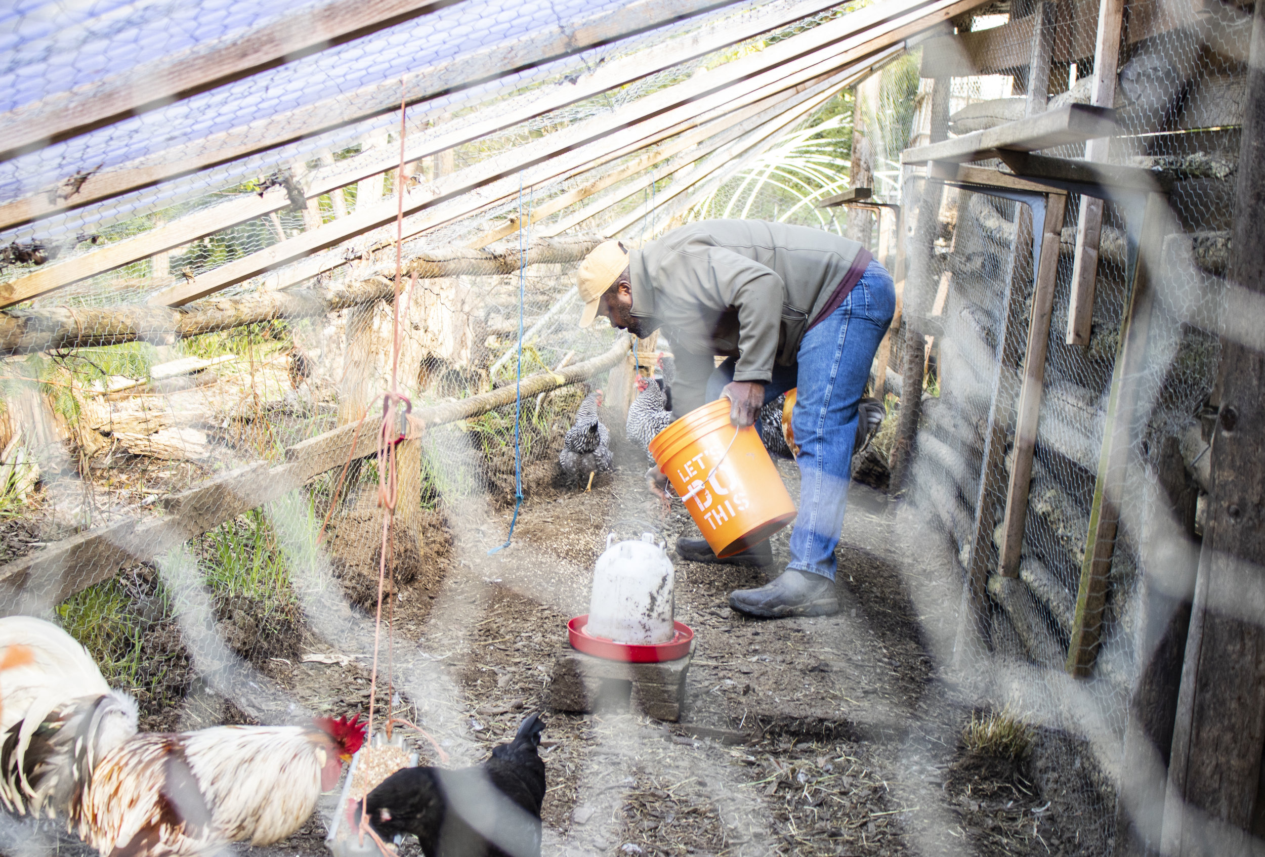Rohn feeding chickens.