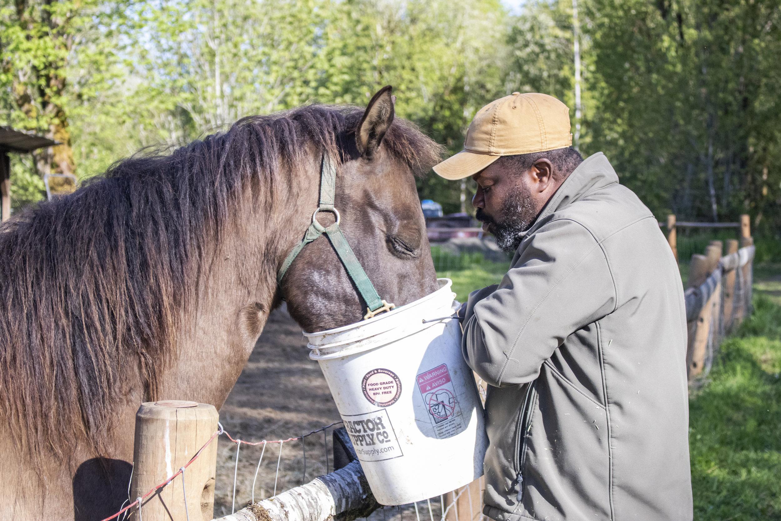 rohn_feeding_horse.jpg
