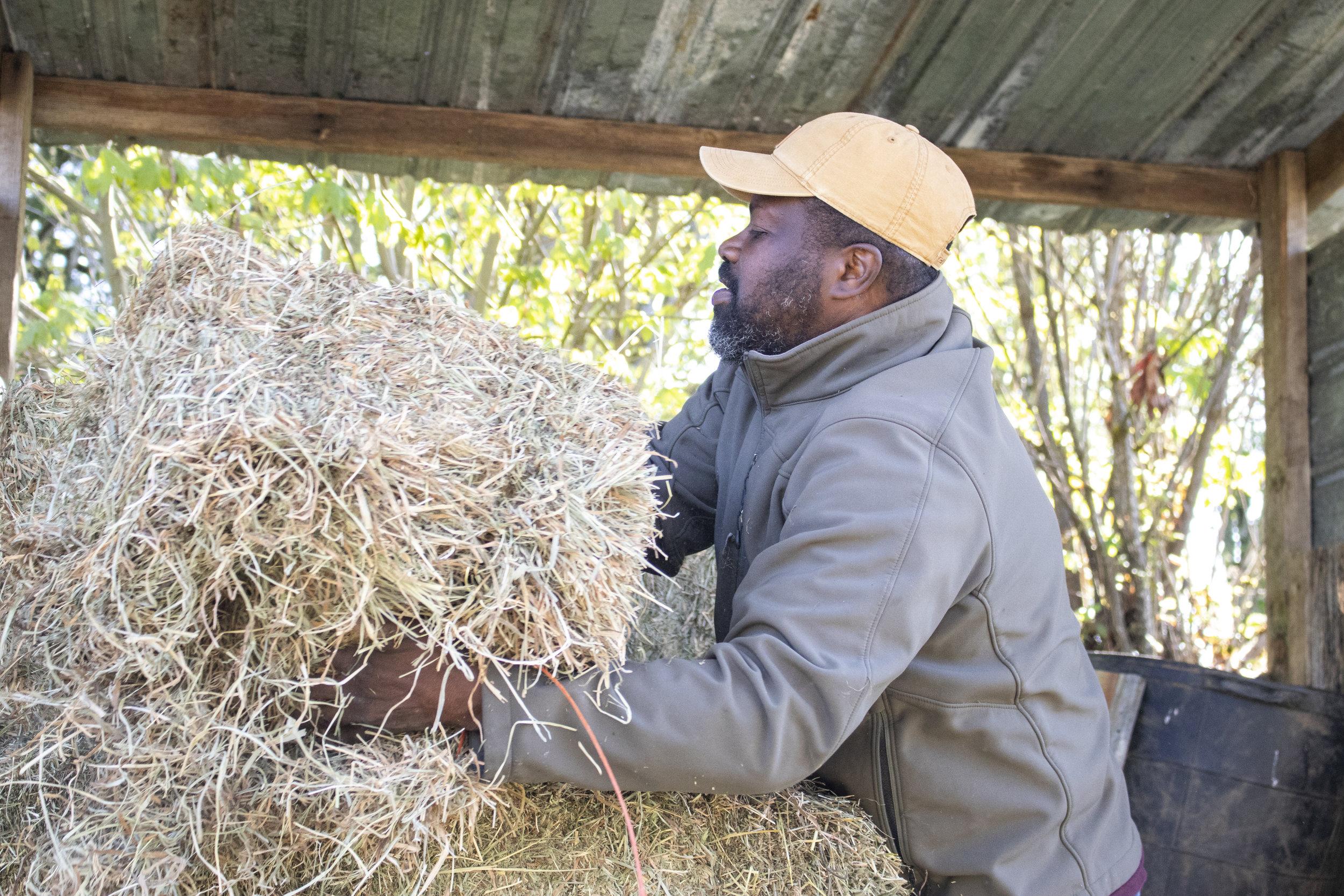 Rohn preparing to feed his horses.
