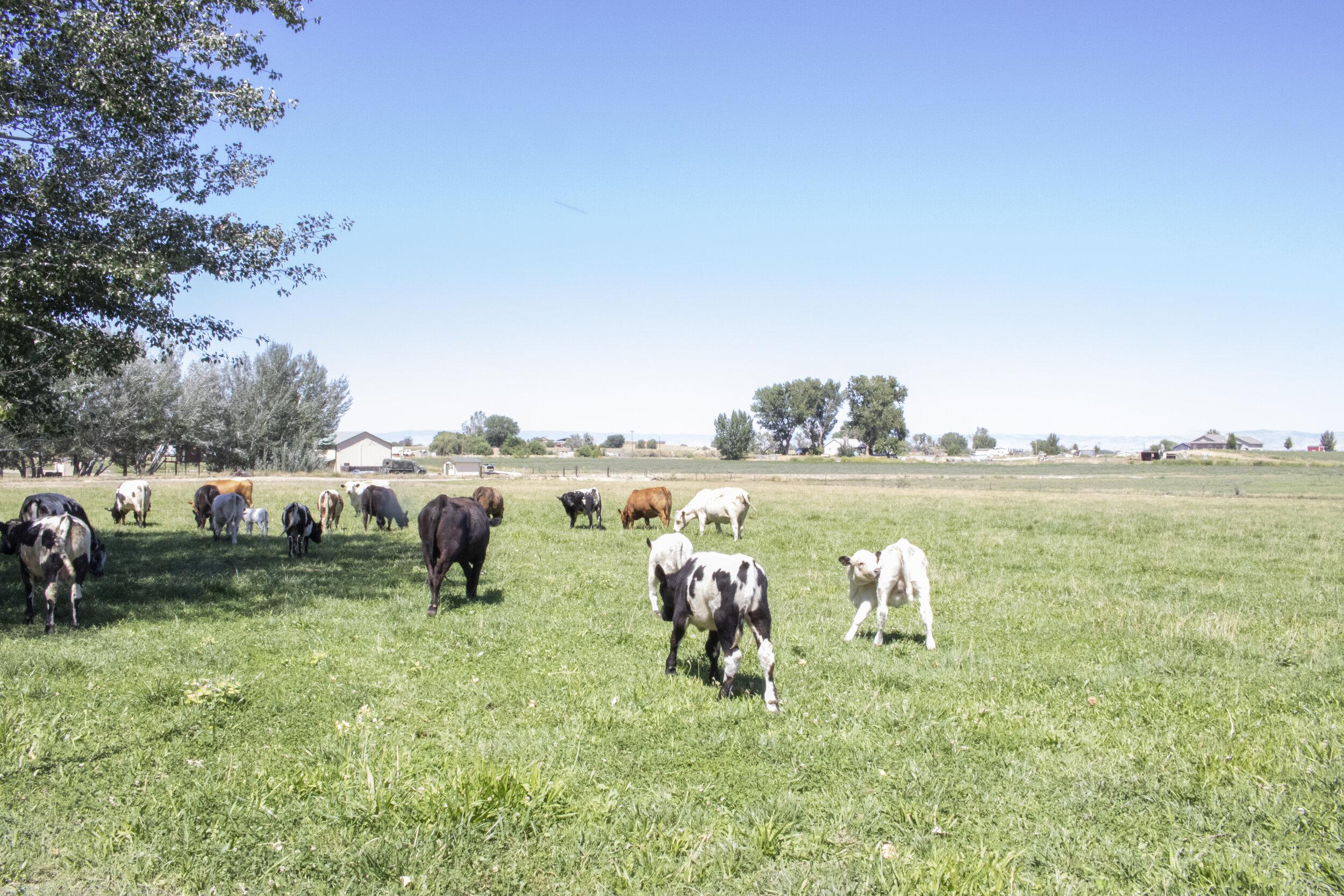 Roan Creek Ranch in Fruita, Colorado.