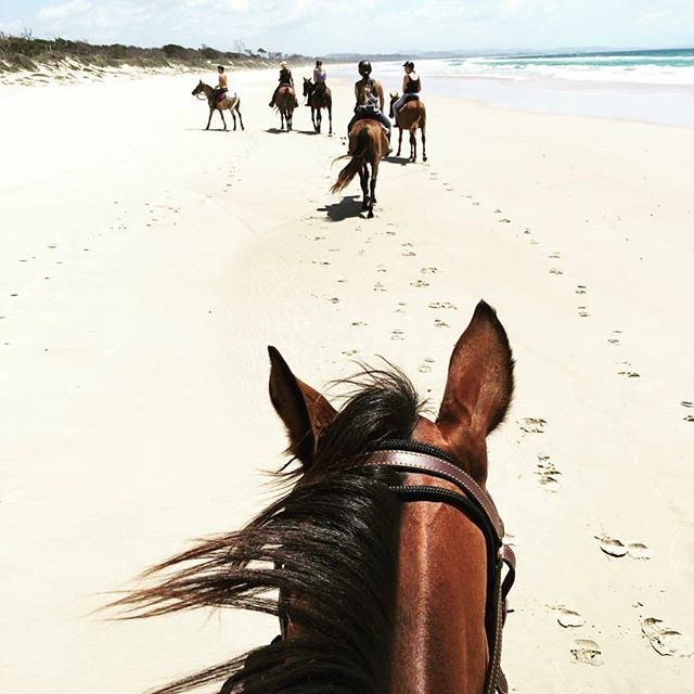 Could there be a better way to start the day? We think not... @zephyr_horses 🦄  #rideawayonmyzephyr . . . . . . . . . . . . . #byronbay#byron#byronaccommodation#byronbayaccommodation#gosamara#byronbayapartments#byronfamilyholiday#byronattractions#byronlife#byronthingstodo#byroncafe#byronrestaurant#byronshopping#supportlocal#byronfood#fromwhereyoudratherbe#australia#byrontourism#gosamaraapartments#staycayerryday#horse#riding#beach#beautiful