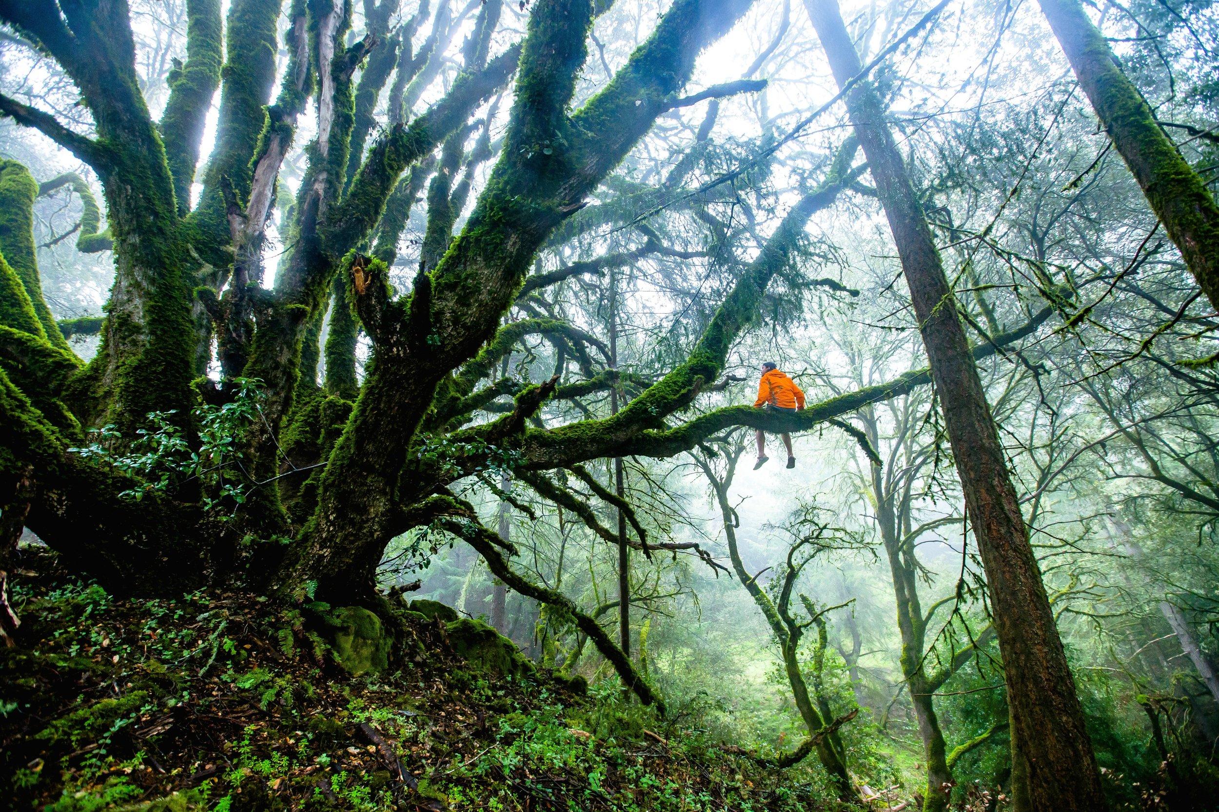 forest-1245692.jpg