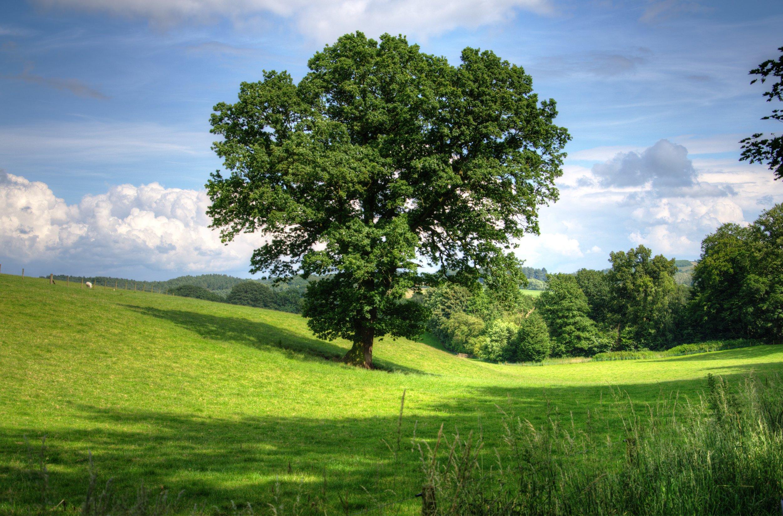 tree-402953.jpg