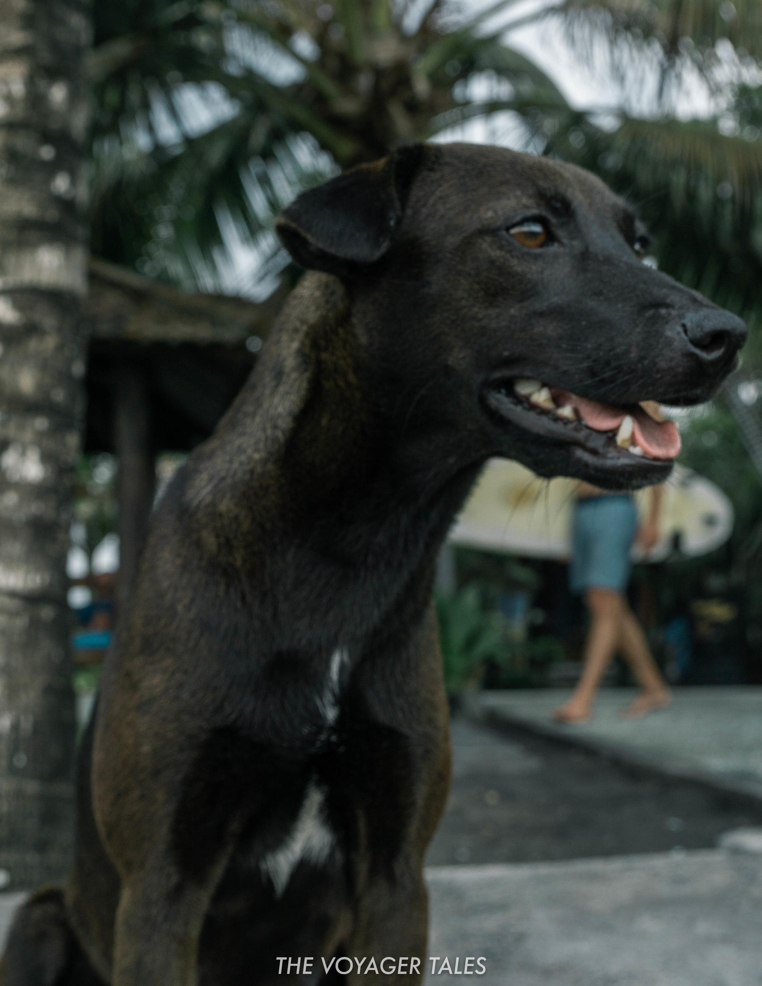 Dogs in Bali.jpg