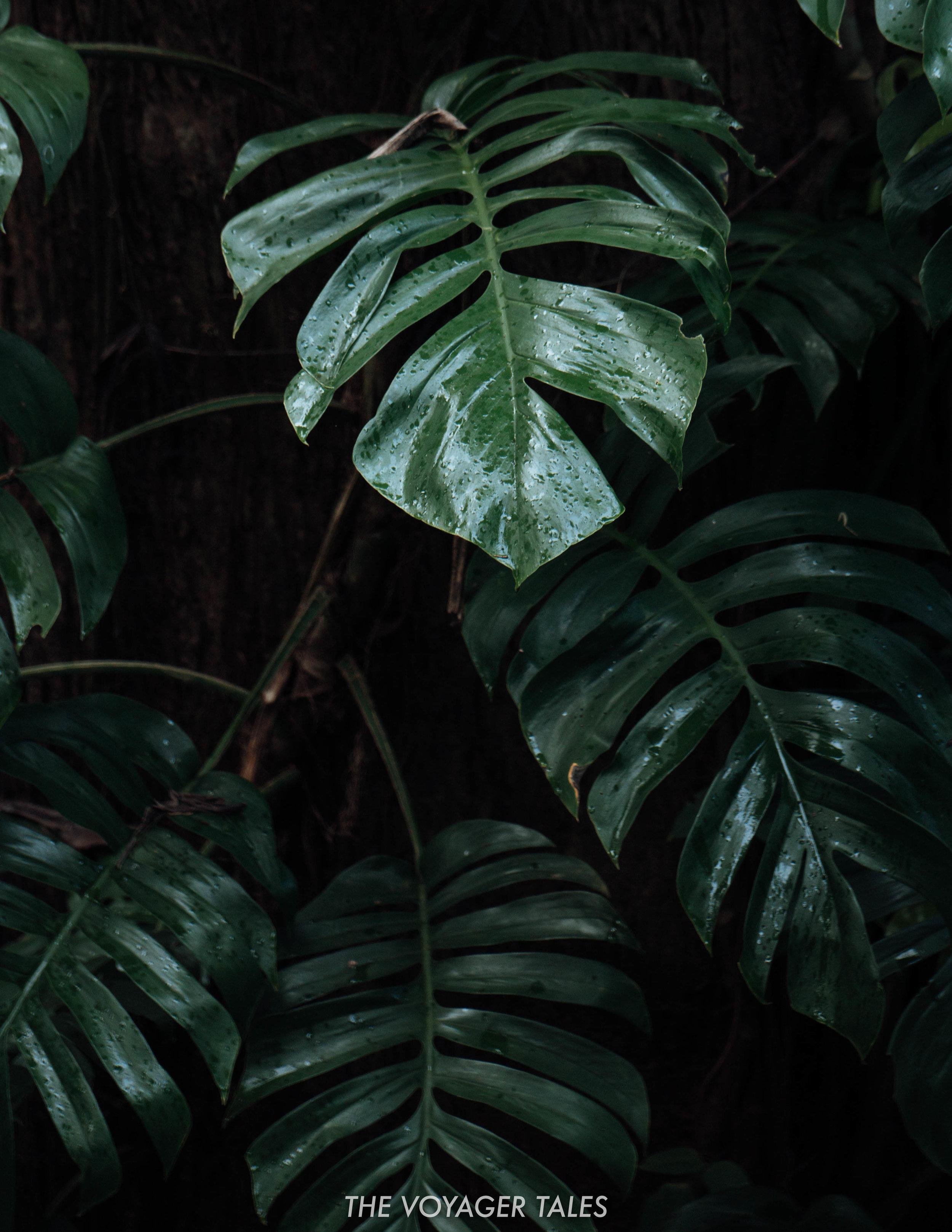 Jungle Vibes.jpg
