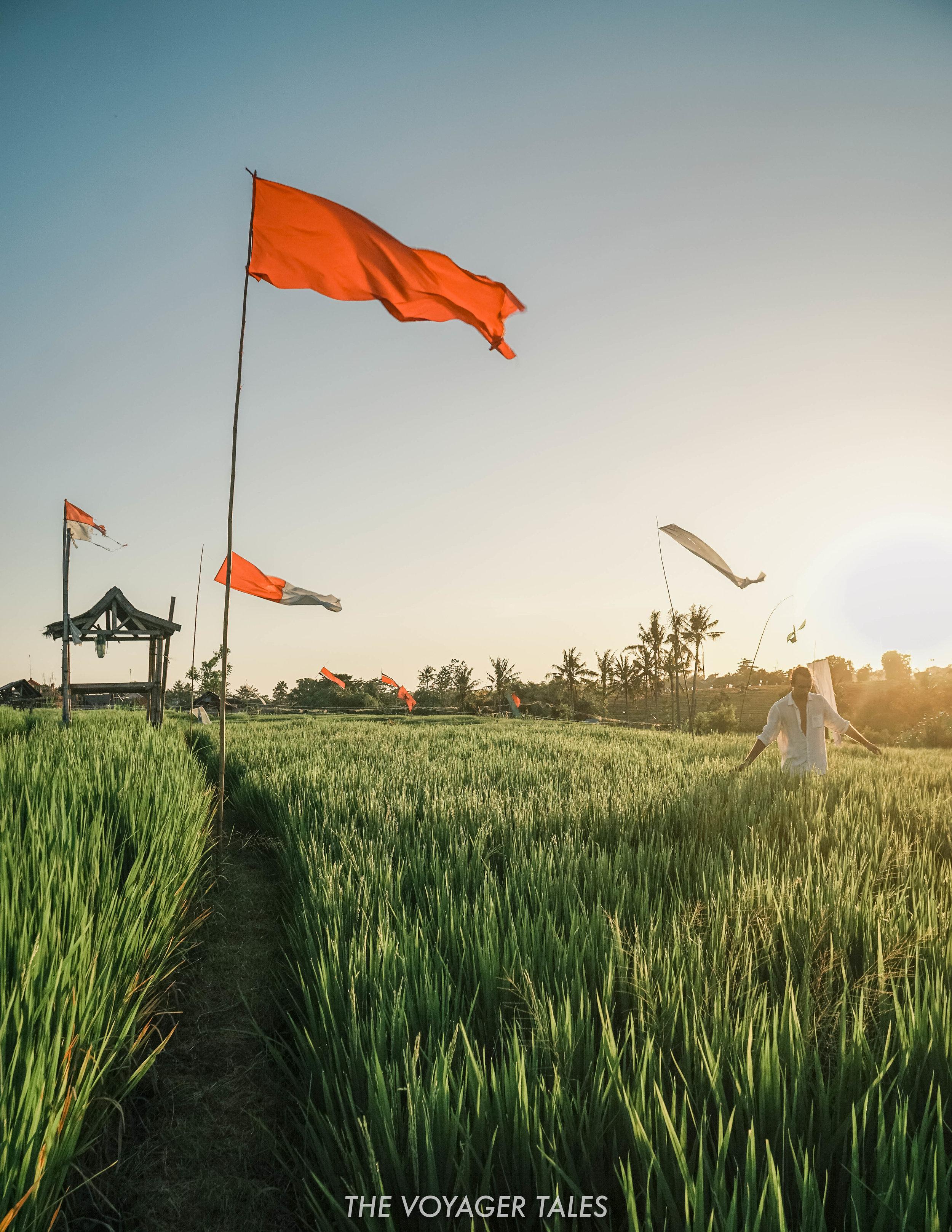 Rice Paddy Views.jpg