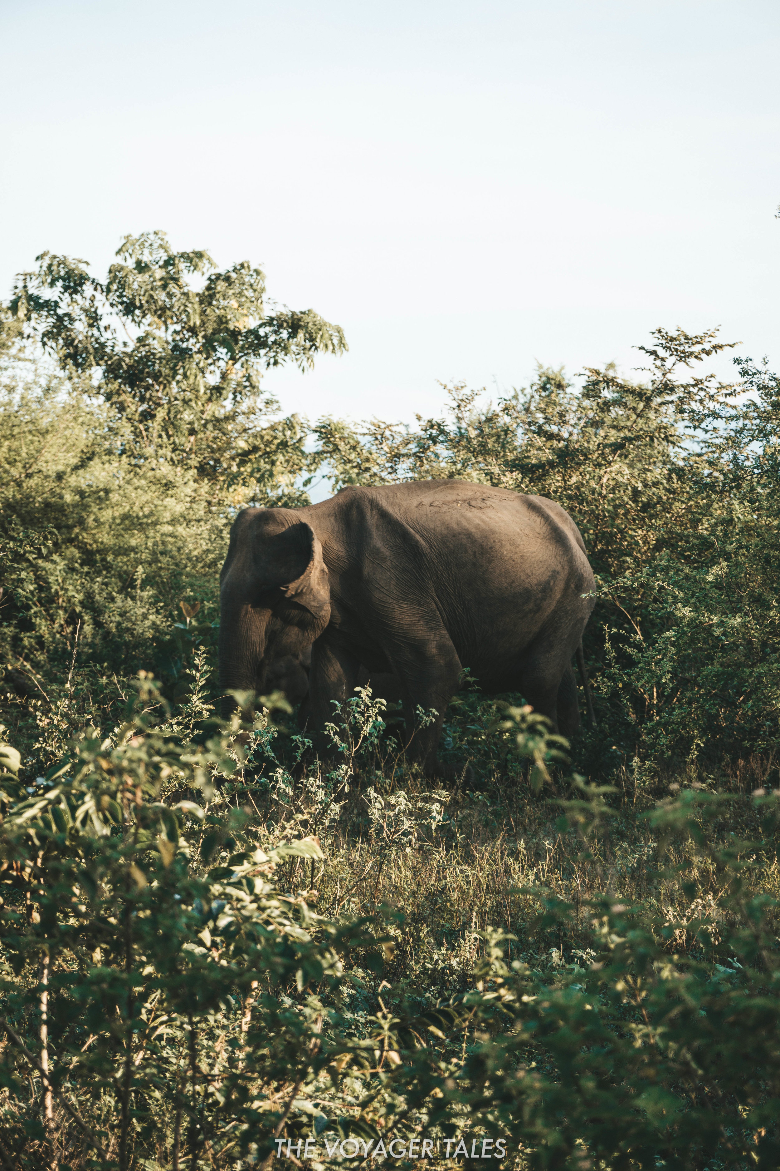 Udawalawe National Park.jpg