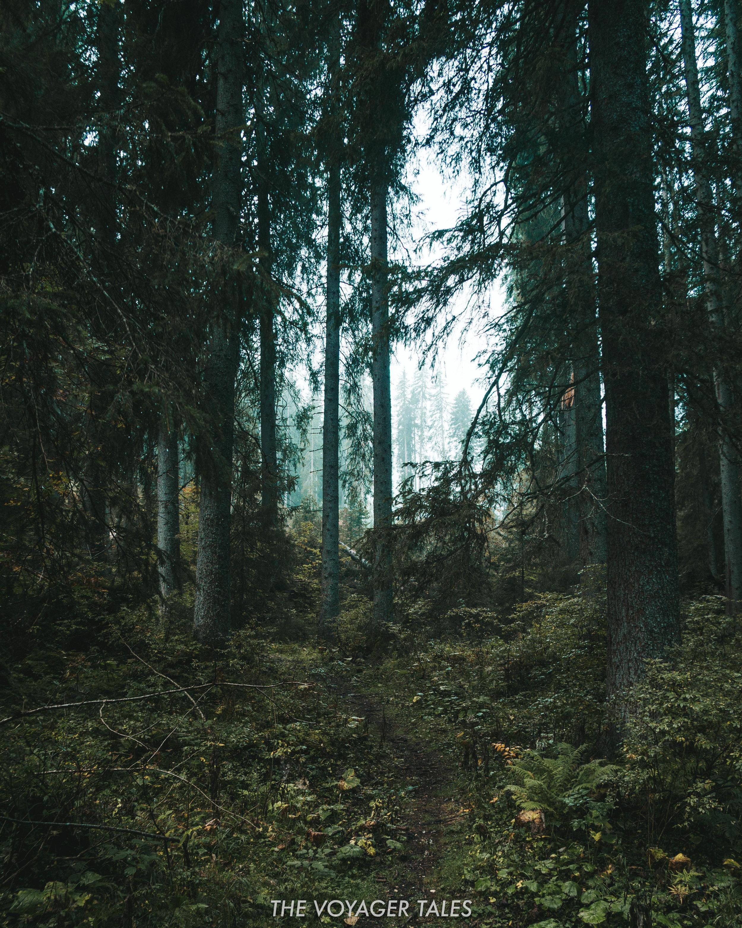 Alpine forest near Lago di Carezza
