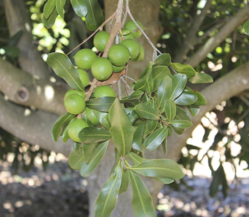 30f fruit.jpg