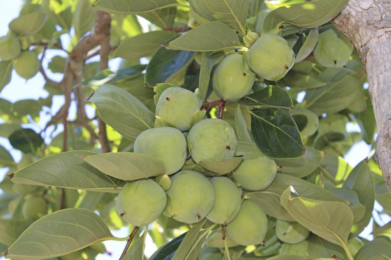 30j fruit.jpg