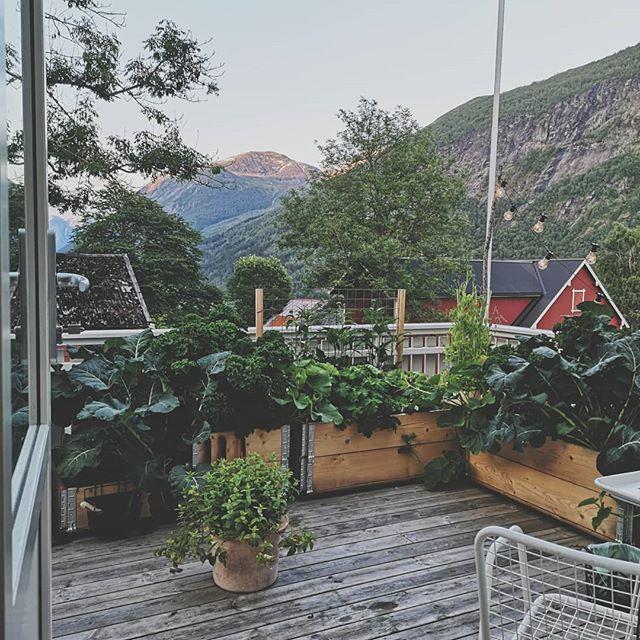 Lykke! Å komme hjem til en hage som har tatt over hele verandaen. Nå må jeg spise grønnkålsalat og drikke mynte-te til neste januar. En greie jeg er helt med på!