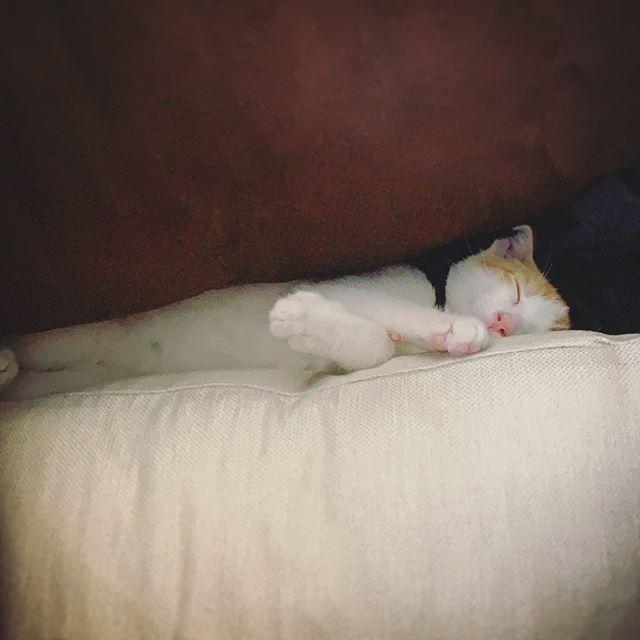 Weird way to sleep but you do you... #kitten #sleepy #catsofinstagram