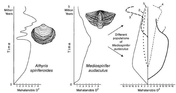 From Eldredge  et al.  2005.  Paleobiology  31:133-145. Copyright the Paleontological Society.