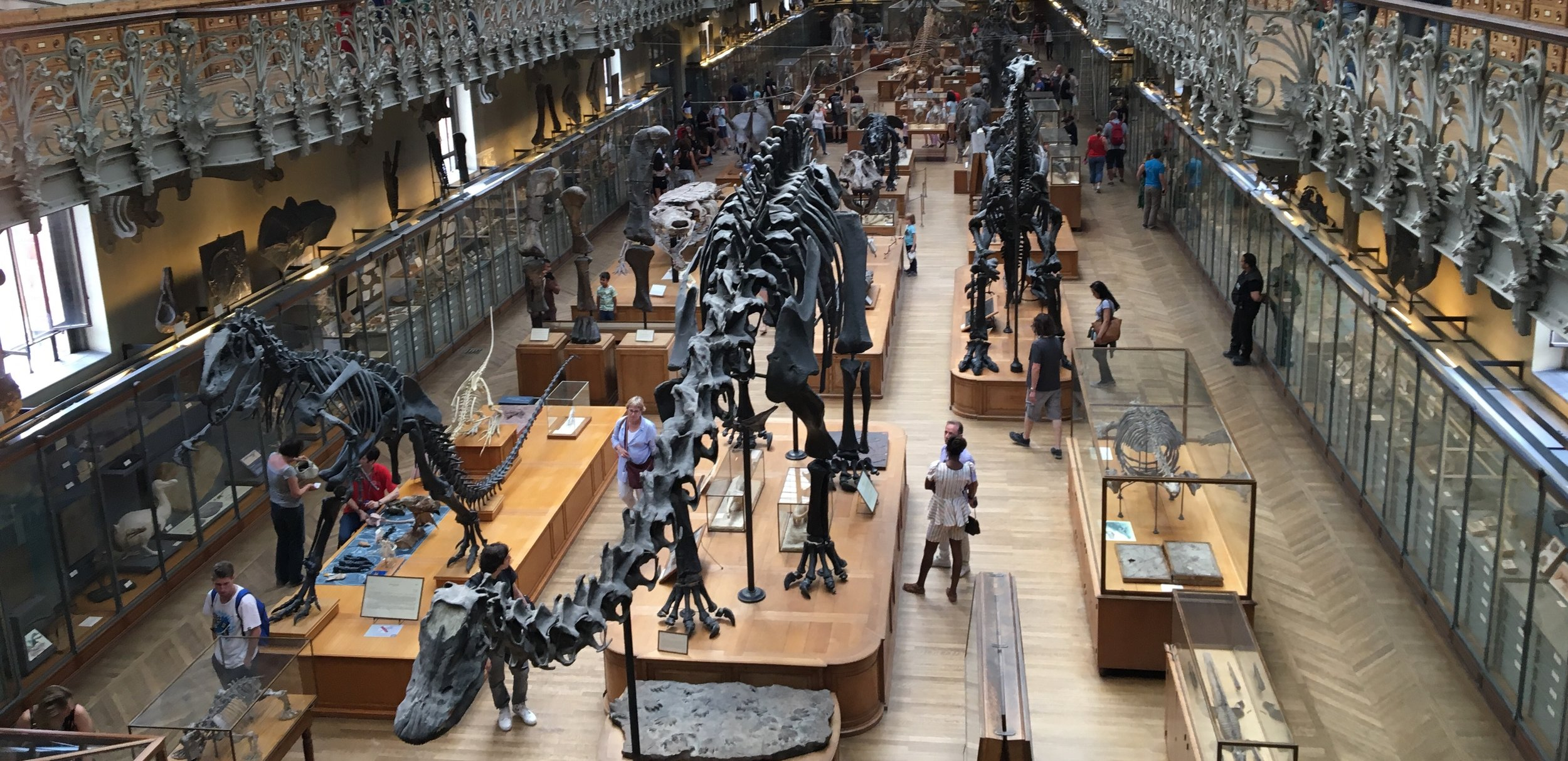 Interior of the Galerie de Paleontologie et d'Anatomie Comparee (Paleontology and Comparative Anatomy Gallery, Paris); photo by Bruce S. Lieberman.
