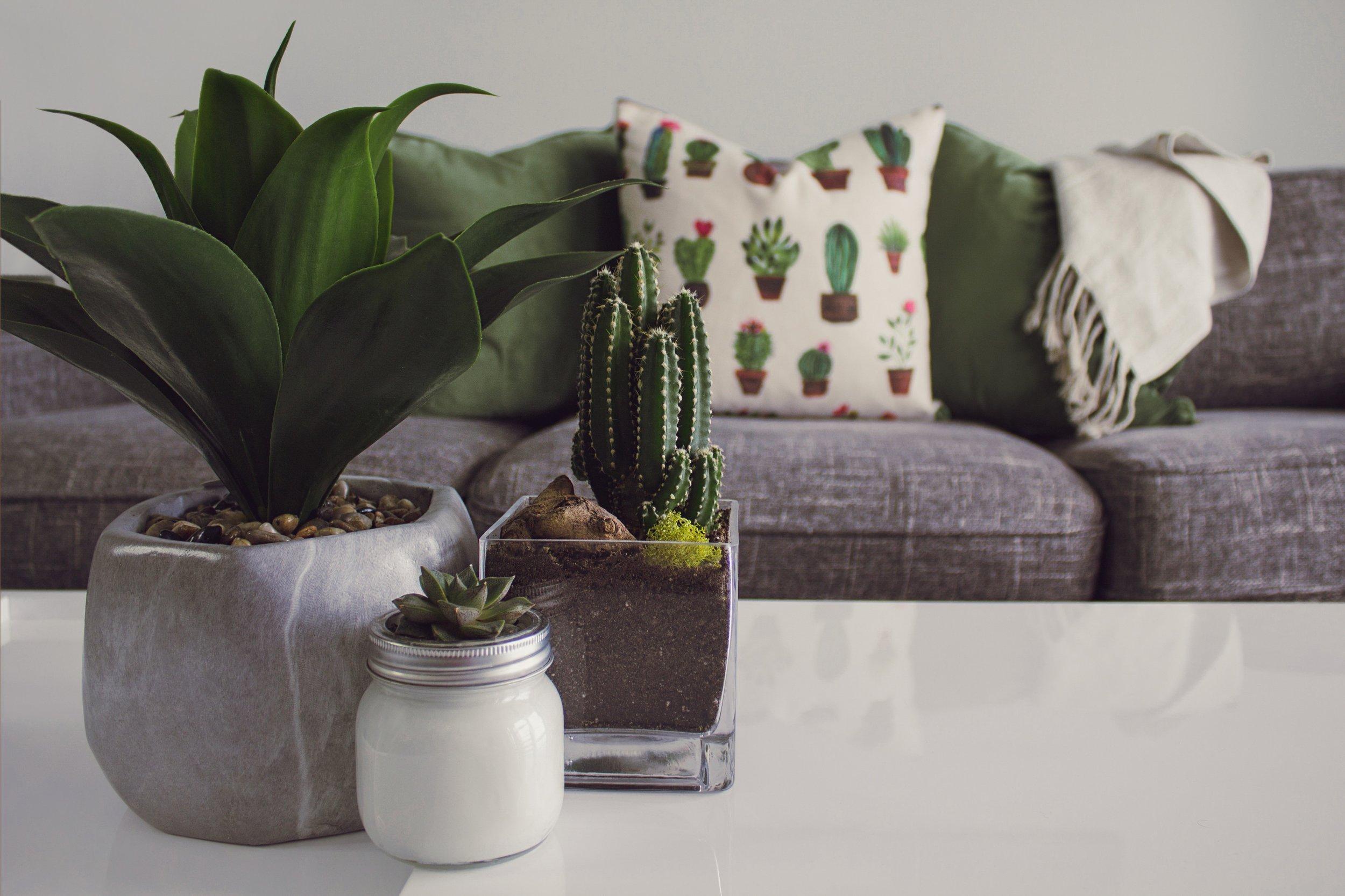 cactus-cactus-plant-contemporary-1005058.jpg