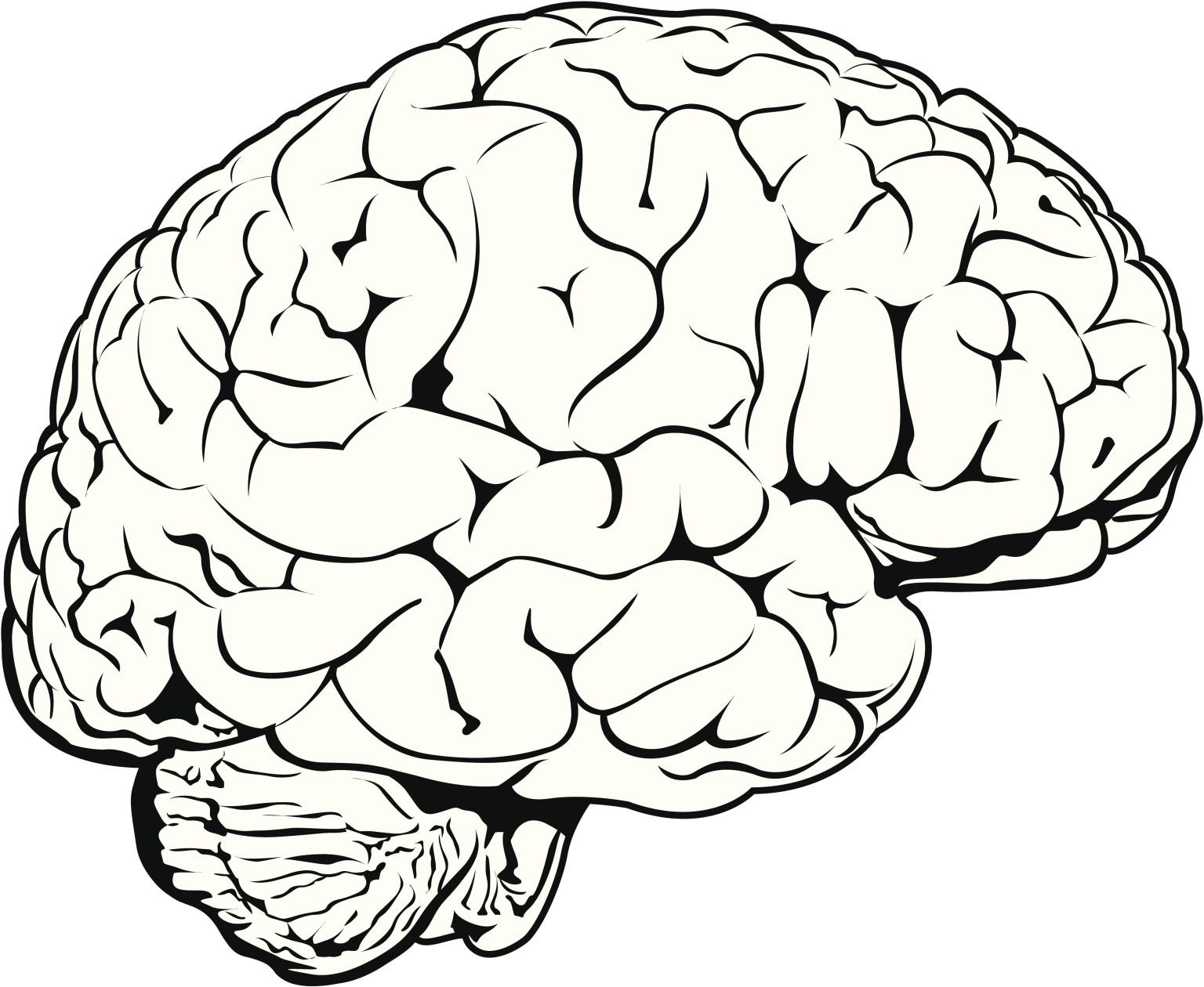 Picture of brain.jpg
