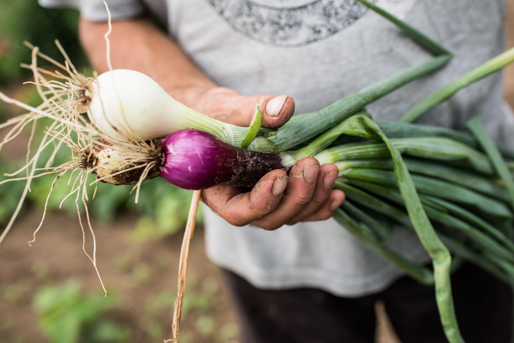 Copy of Les 3 Poiriers - Récolte de Chez Nous - Really Local Harvest