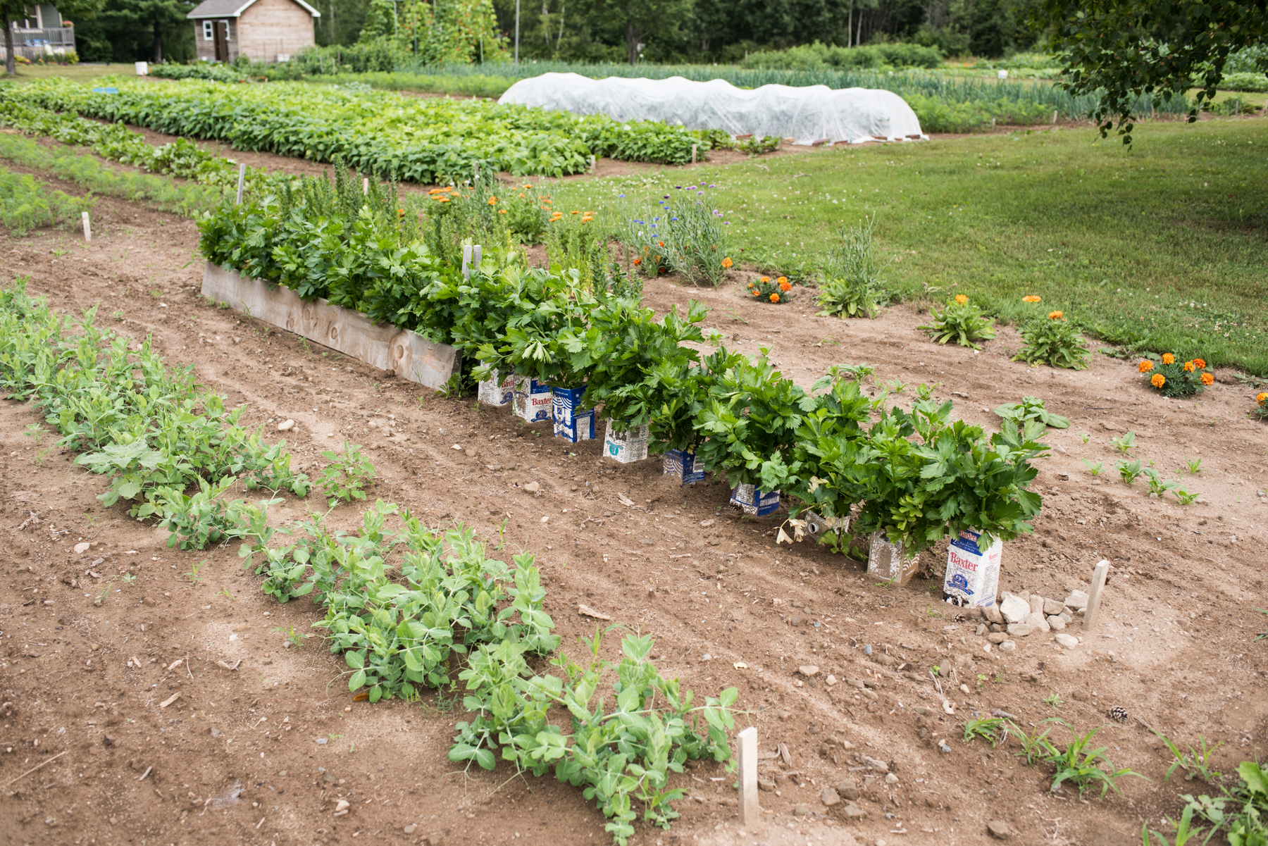 Les 3 Poiriers - Récolte de Chez Nous - Really Local Harvest