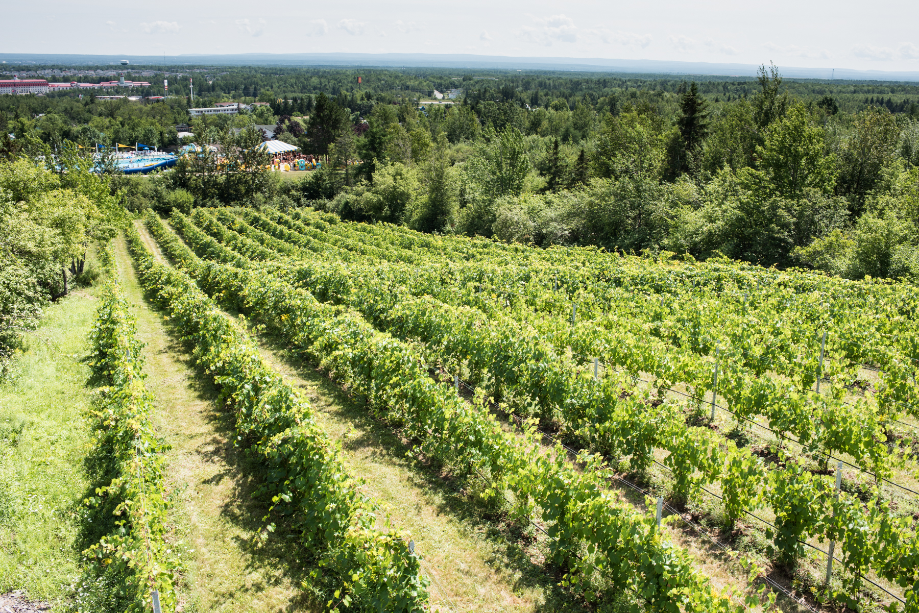Magnetic Hill Winery - Récolte de Chez Nous - Really Local Harvest