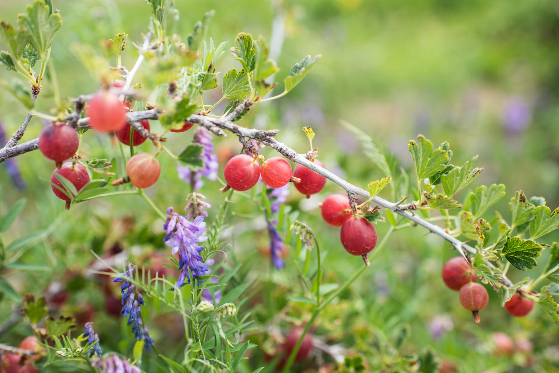 Petits Fruits -85.jpg
