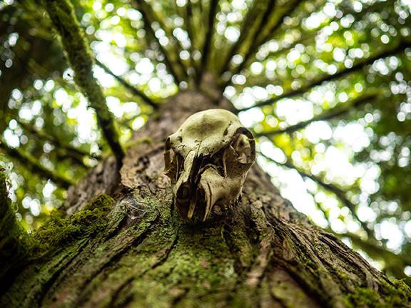 skull image.jpg