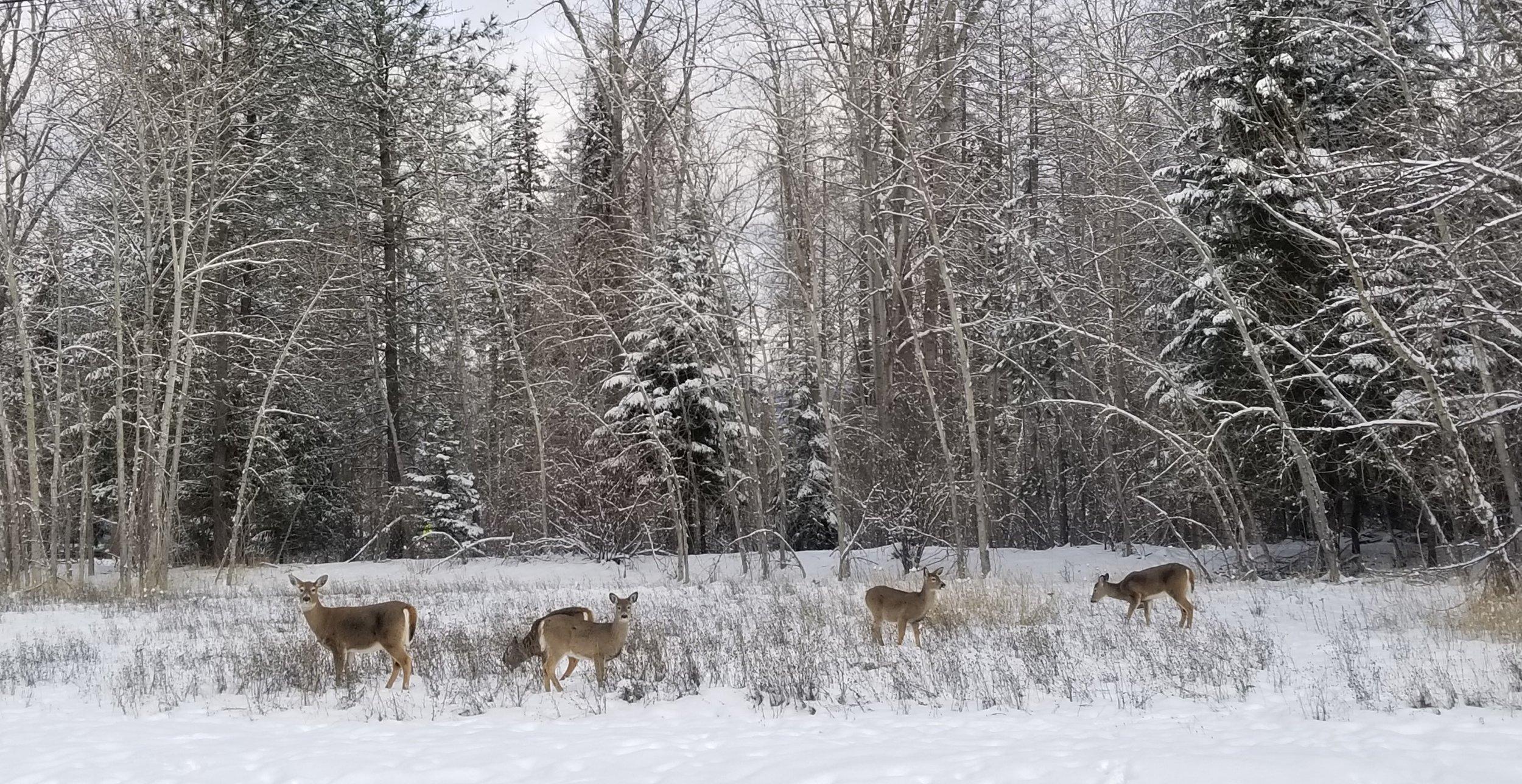 Winter Backyard 3.jpg