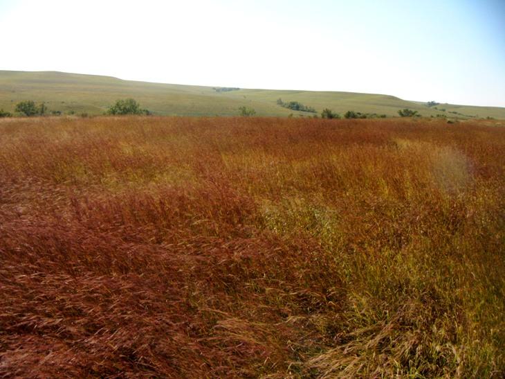 Tallgrass prairie.JPG