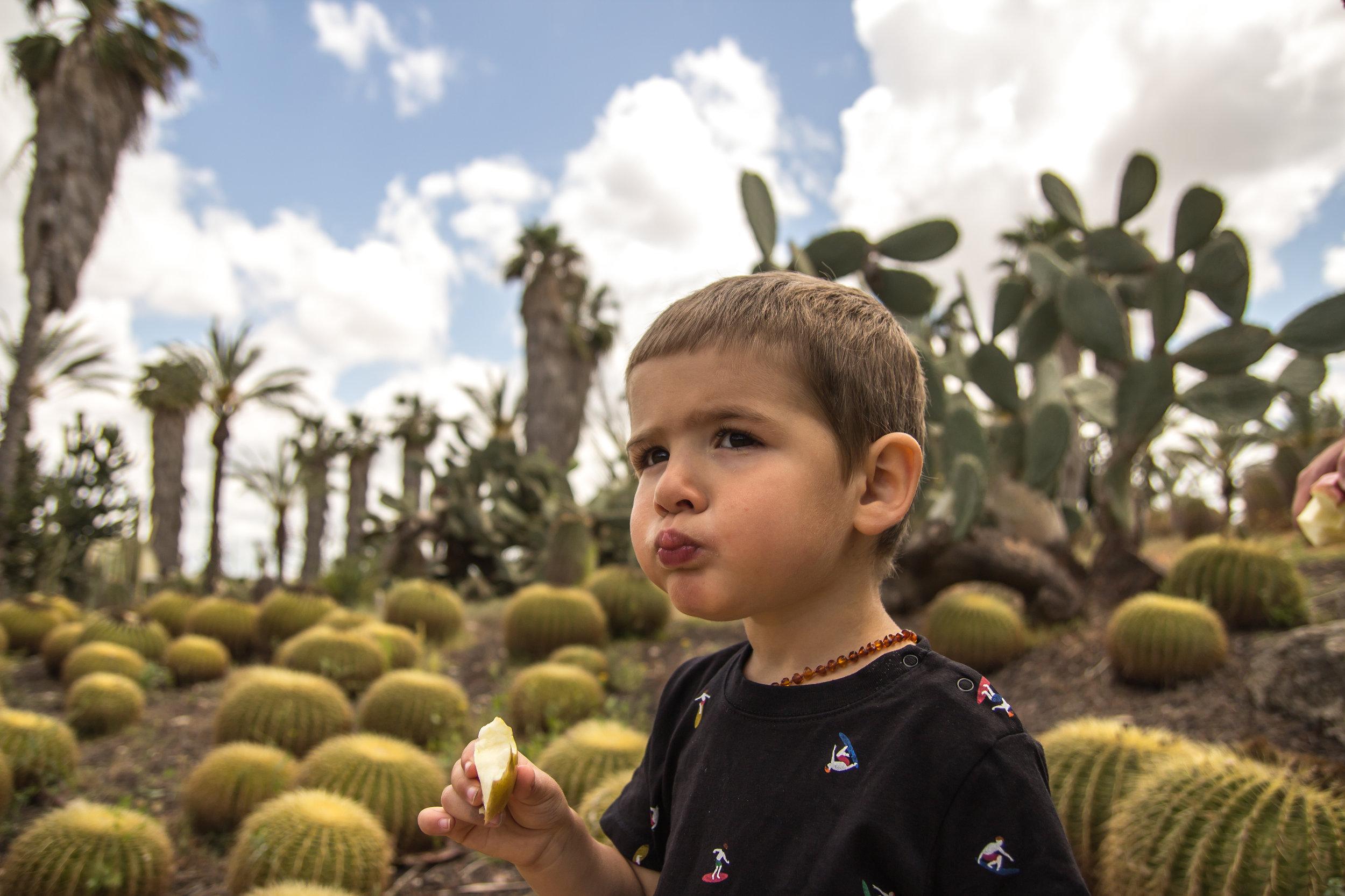 Cactus Garden (13 of 23).jpg