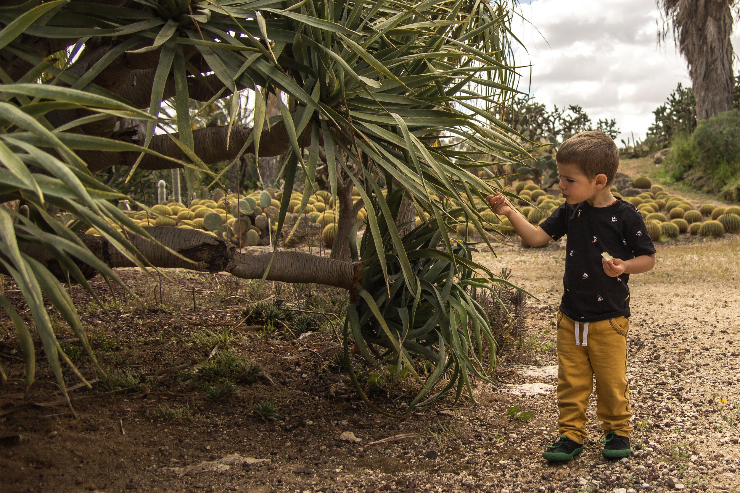 Cactus Garden (16 of 23).jpg