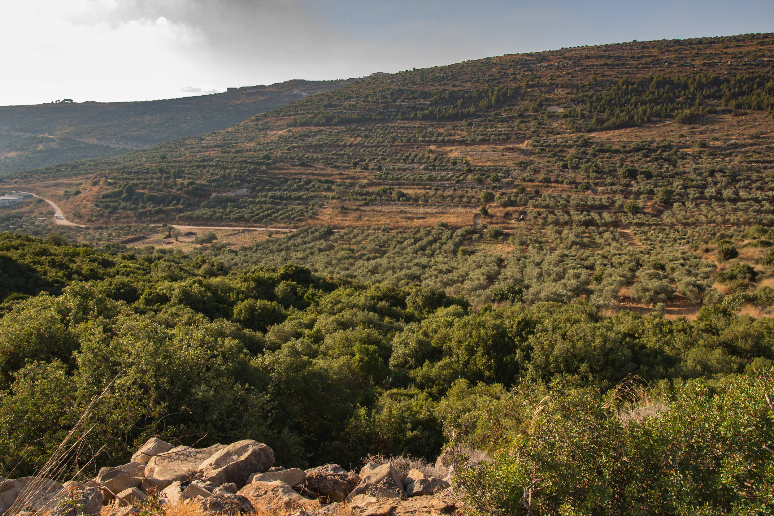 The view from the olive orchard at the yeshuv we stayed in.